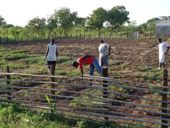 Training Centre: Jugendliche erlernen den Bio-Gemüseanbau