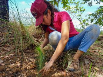 Während eines Praxiseinsatzes im Rahmen der Umweltschulung haben die Jugendlichen aus eigener Initiative 1'800 Bäume gepflanzt.
